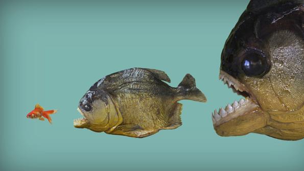 Big Fish Online Spiele