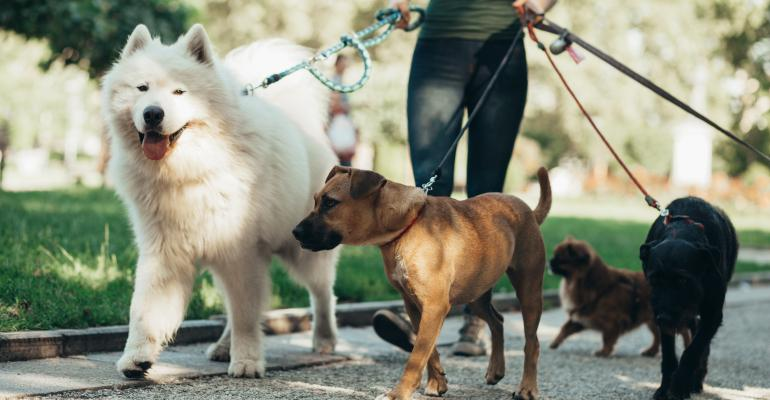 dog walker-Getty Images-1136886549.jpg