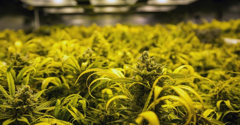 Industrial Sector Gets High on $2.7B Marijuana Industry