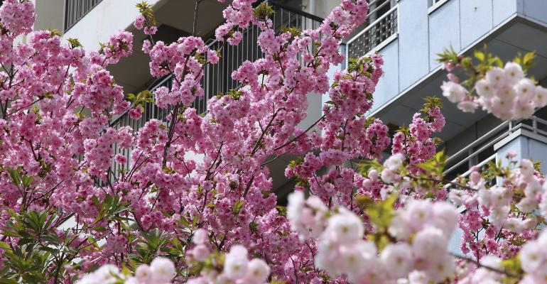 Multifamily Rents Up This Spring